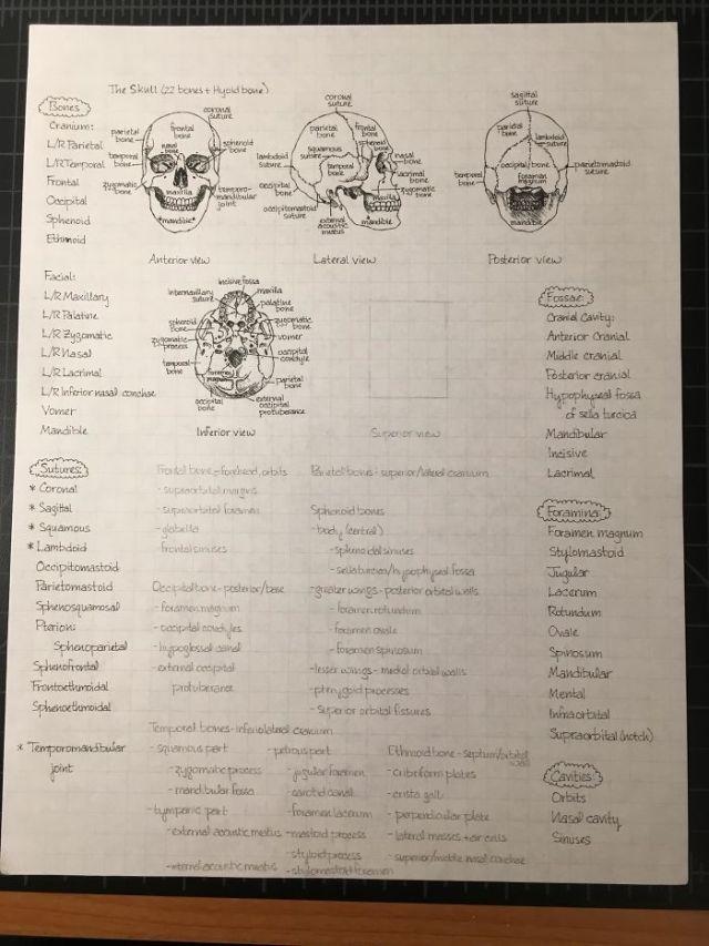 Notas a mano de anatomía