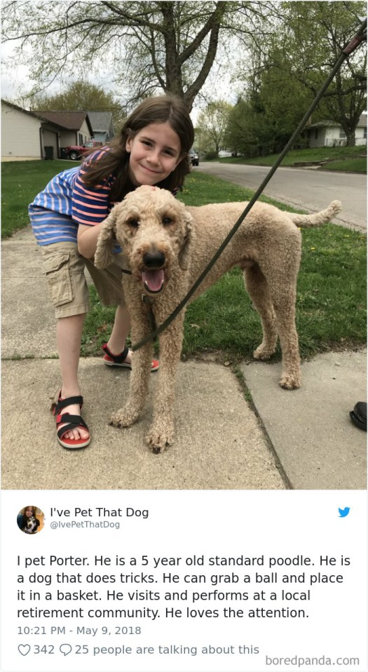 9-Year-Old-Boy-Gideon-Petting-Dogs-Twitter-Ivepetthatdog