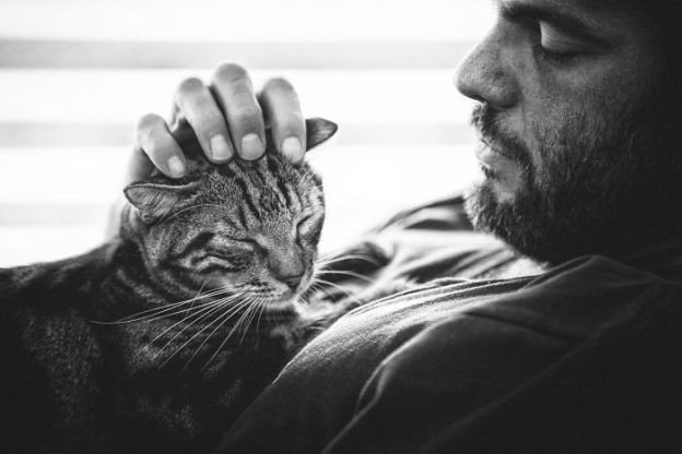 IMG_9037-5b02f1835fe25__700 I Photograph Men With Their Cats And The Result Is Cuteness Overload! Design Photography Random