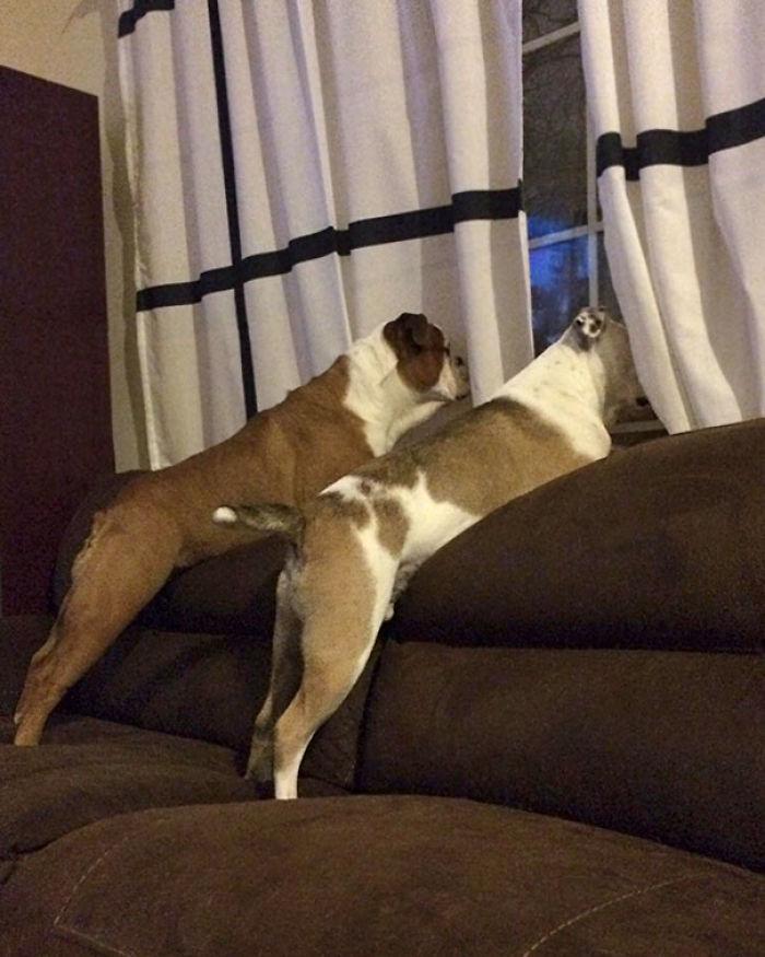 Uno de nuestros perros es claramente más inteligente que el otro