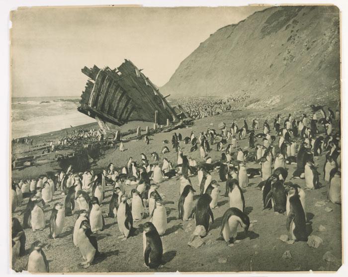 Wreck Of The 'Gratitude' In Macquarie Island