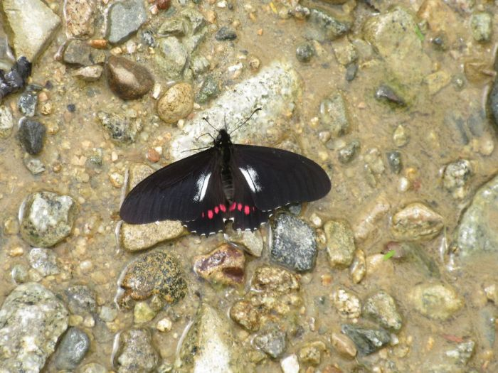 """A Butterfly I Have Named The """"Sad Face Butterfly"""""""