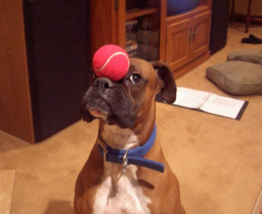 If You Need A Laugh – Get A Boxer