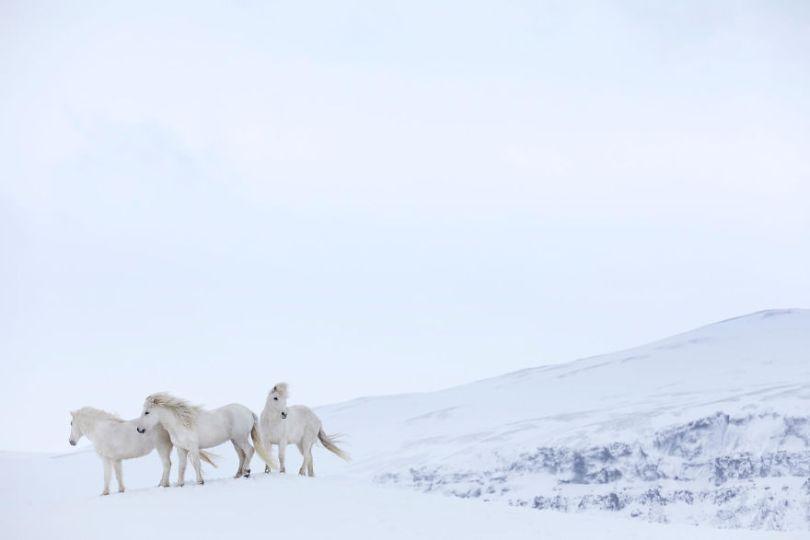 animal photography icelandic horses in the realm of legends drew doggett 26 5b5afc00cef9b  880 - Encantadora série de fotografias de Drew Doggett e os cavalos islandeses