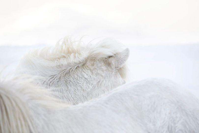 animal photography icelandic horses in the realm of legends drew doggett 3 5b5afbd280788  880 - Encantadora série de fotografias de Drew Doggett e os cavalos islandeses