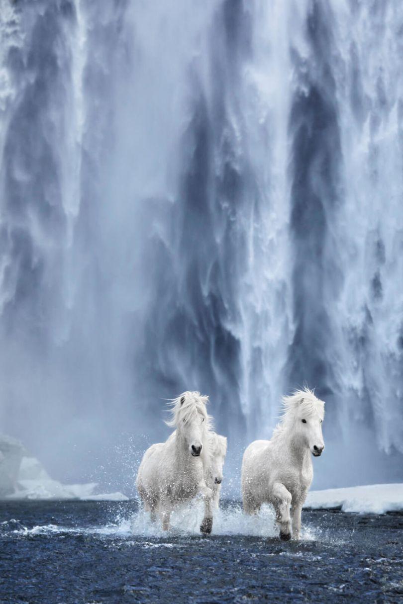 animal photography icelandic horses in the realm of legends drew doggett 32 5b5afc0cc0d0f  880 - Encantadora série de fotografias de Drew Doggett e os cavalos islandeses