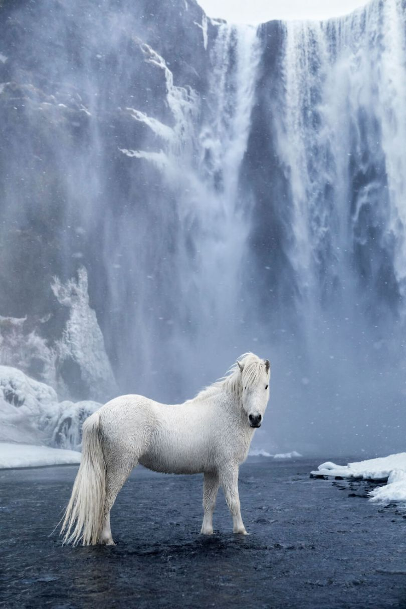 animal photography icelandic horses in the realm of legends drew doggett 34 5b5afc12d0c8f  880 - Encantadora série de fotografias de Drew Doggett e os cavalos islandeses