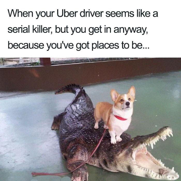 animals-using-uber-memes-1-5b4310dcb208f__700 15+ Of The Funniest Uber Memes With Animals Design Random