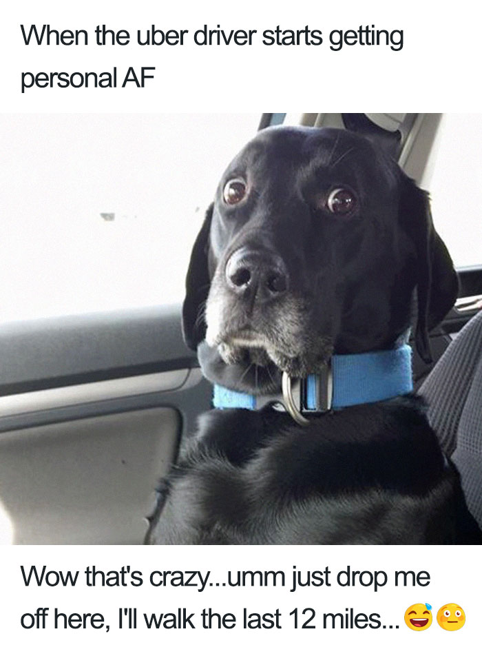 animals-using-uber-memes-4-5b4310e1bed1b__700 15+ Of The Funniest Uber Memes With Animals Design Random