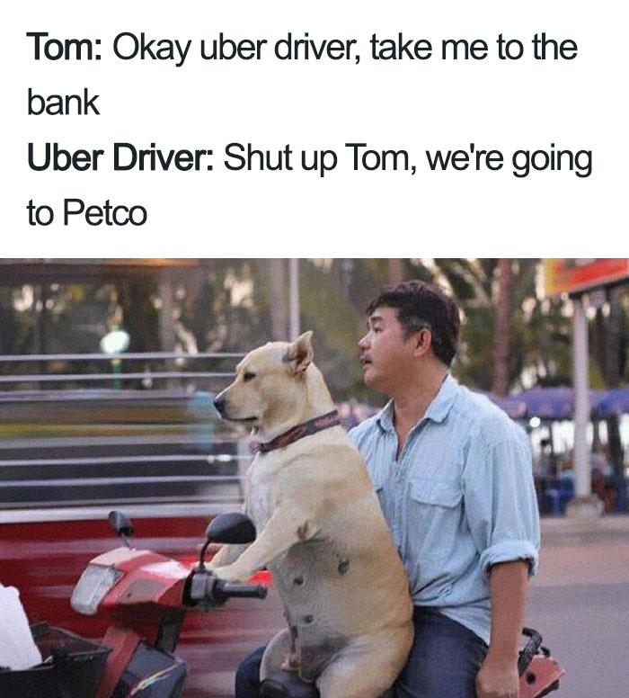 animals-using-uber-memes-9-5b4310e9b46a7__700 15+ Of The Funniest Uber Memes With Animals Design Random