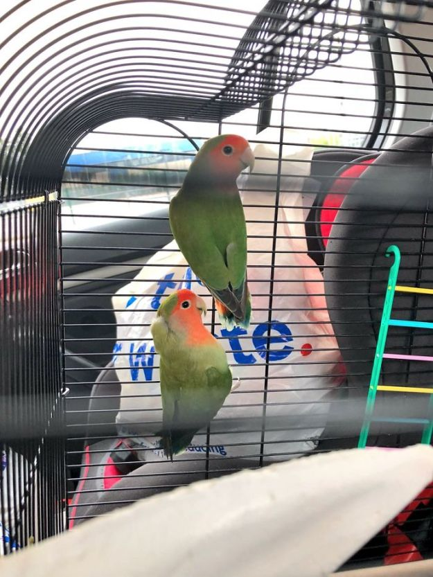 crazy-mom-buys-parrots-twitter-5b4310175feca__700 Mom Calls Daughter Asking If She Can 'Keep A Secret' From Dad, And It Escalates Hilariously Design Random