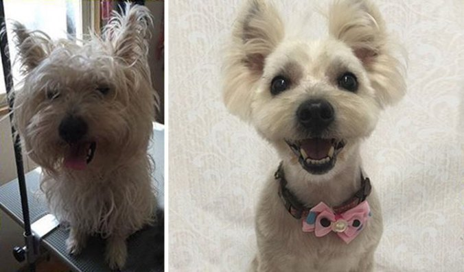 dog-grooming-transformations-yoriko-hamachiyo-japan-19_taisytas
