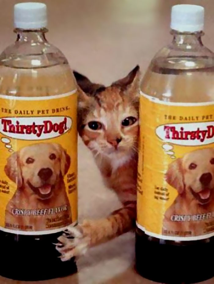 ¡Gato sediento! ¡Y Thirsty Dog !, 1994
