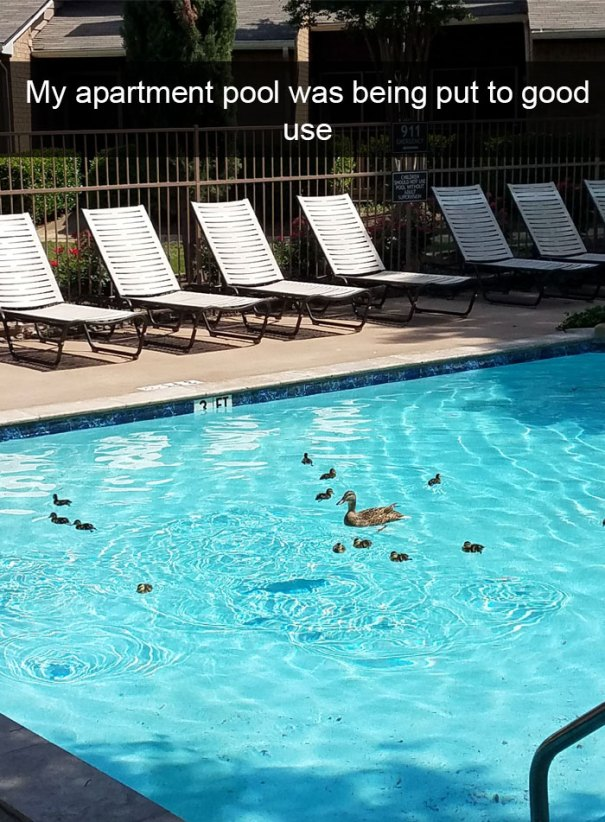 kačky, bazen, zvierata, vtipne, momenty, zvierat, snapchat, leto