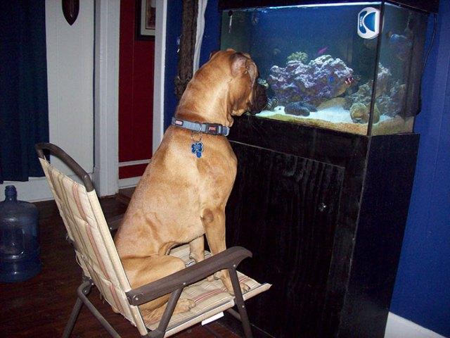 Le gusta mirar a los peces