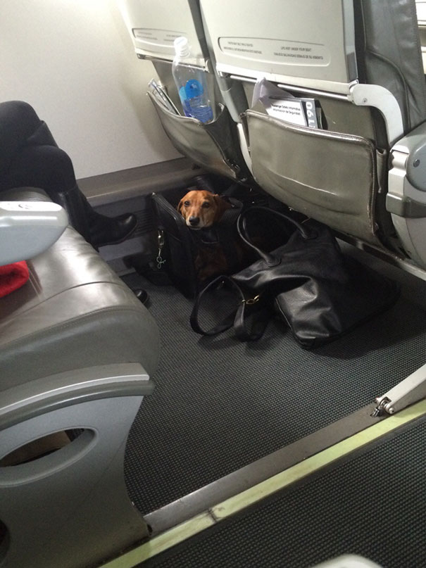 Opened A Bag Of Jerky On A Plane. This Little Fella Popped Up And Surprised Me