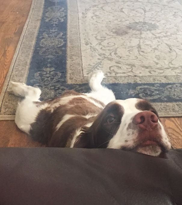 My Boyfriend's Dog Got Tired While Begging For Food