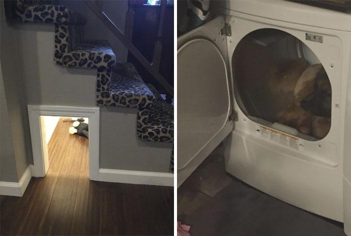 El año pasado, construí una caseta de perro a prueba de sonido y debajo de mis escaleras, por lo que Bucky tendría un lugar seguro Ocultar cuando se asustó El 4 de julio, él me dejó saber, en términos inciertos, que había perdido mi tiempo