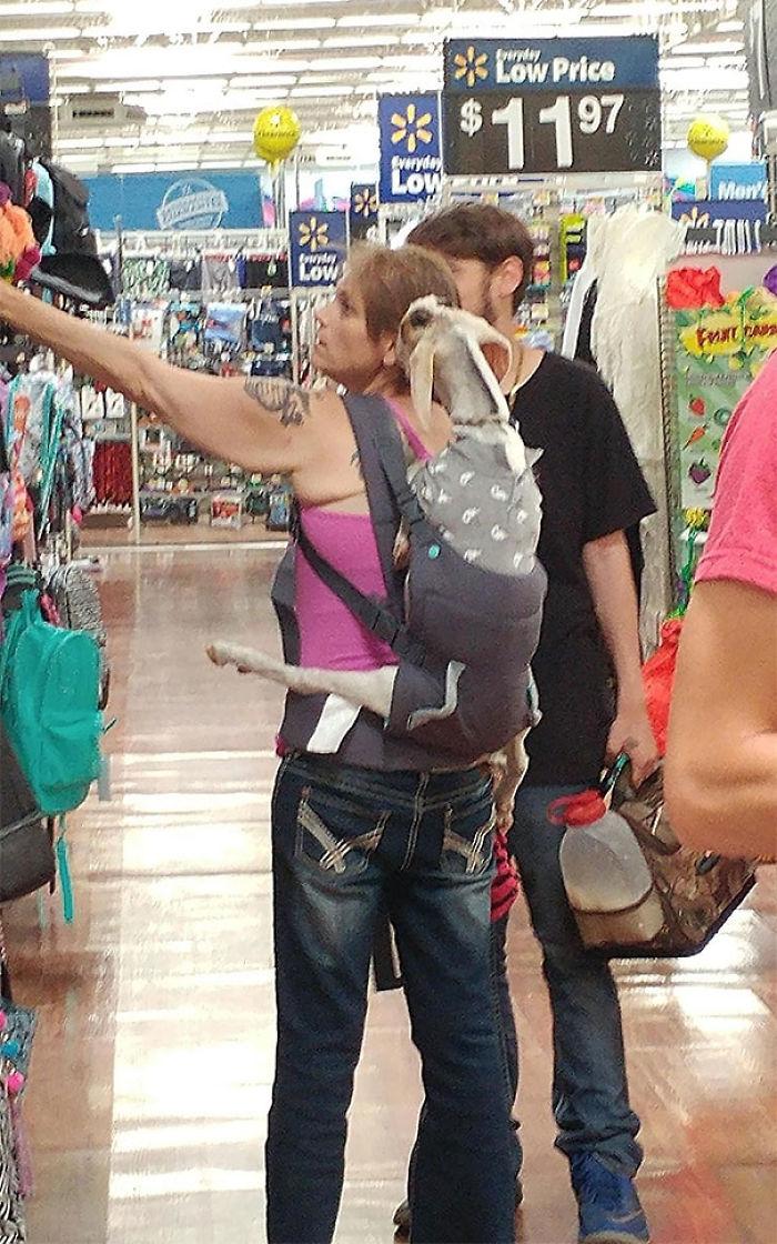 Una chica trae una cabra en la tienda
