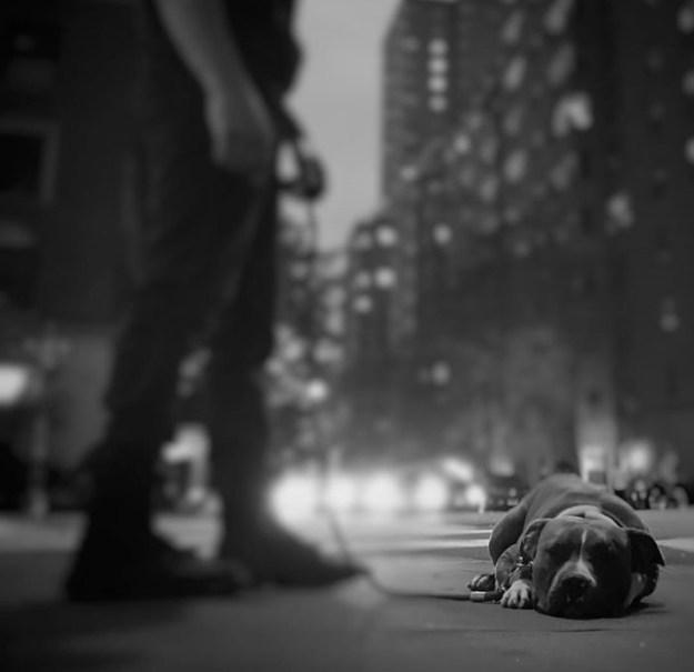 pitbull-lover-jon-bernthal-9-5b588e2432a27__700 Heartwarming Photos Of 'The Walking Dead' Star With His 3 Rescue Pit Bulls Will Melt Your Heart Design Random