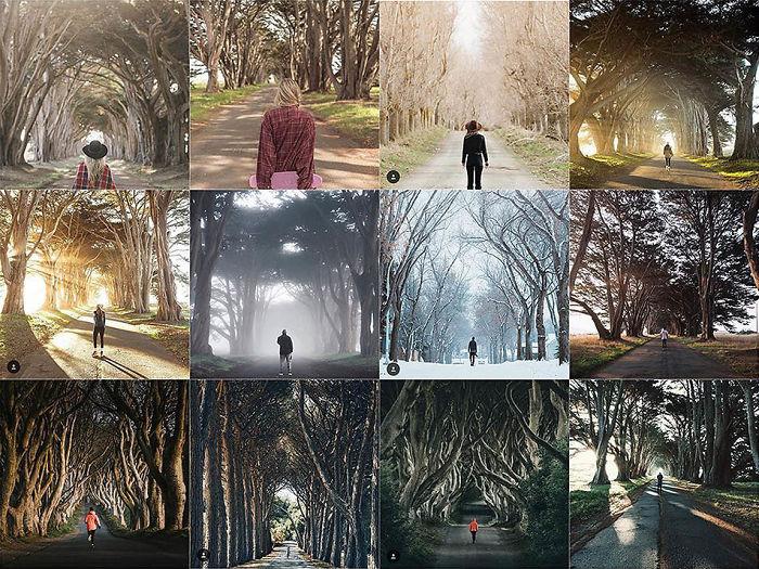 Persona centrada en frente de esta fila particular de árboles