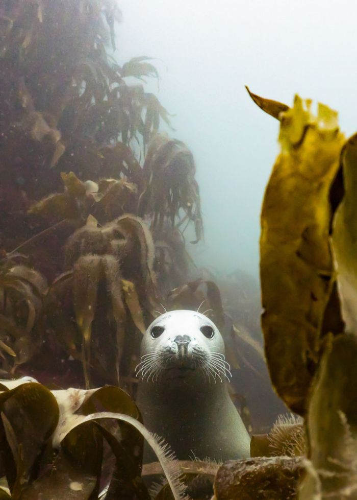 """British Waters Compact Category: """"Peek-A-Boo!"""" By Martin Edser, Uk"""