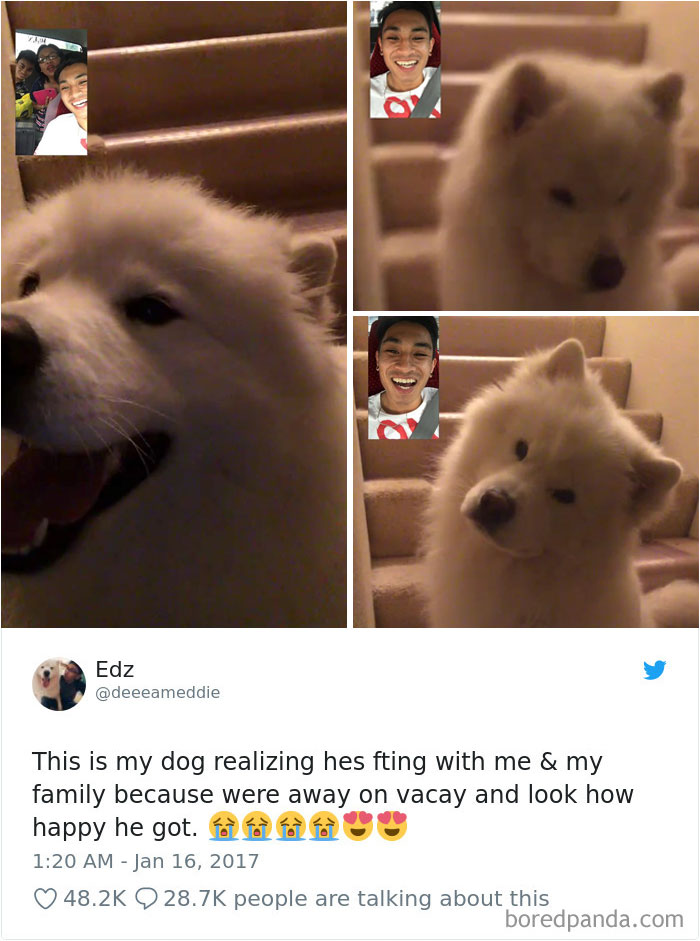 Hilarious-Dog-Tweets [19659117] fuente </a data-recalc-dims=