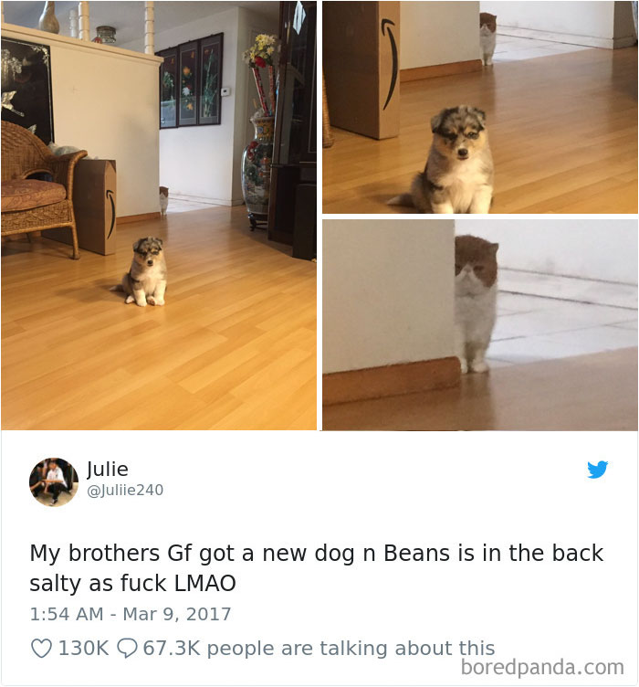 ] Hilarious-Dog-Tweets