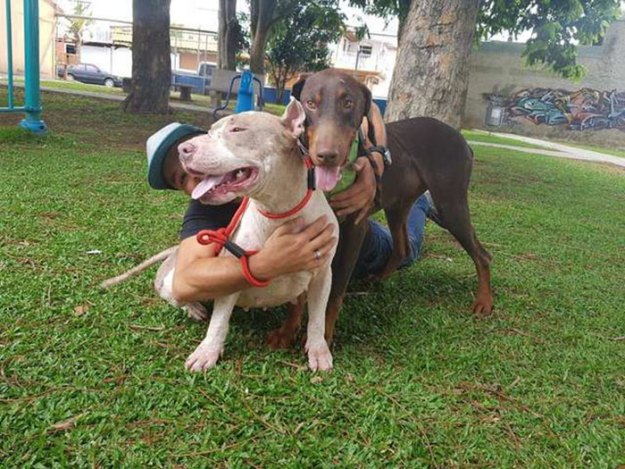 brutally-kept-short-chain-dog-rescued-costa-rica10-5b75229b48034__700 Dog Kept On Such A Short Chain She Could Never Rest Her Head Is Finally Rescued And The After Pics Will Bring You Joy Design Random