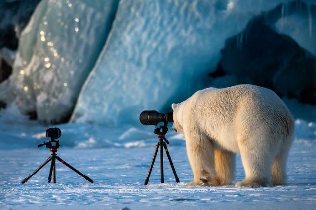Oso fotógrafo