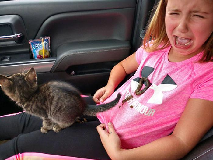 Elyse trajo a casa un nuevo gatito hoy! Gavin Hoefs los grabó vinculándose en camino a casa