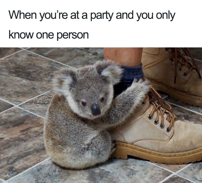 130 Funny Memes That Will Make Every Introvert Laugh Out Loud