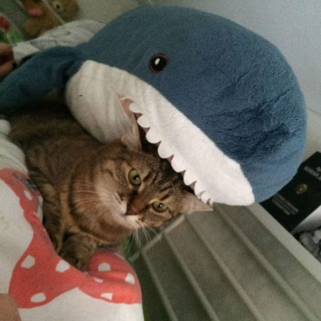 BDQpm2iLeQ3-png__700 IKEA Released An Adorable Plush Shark And People Are Losing Their Minds Over It Design Random