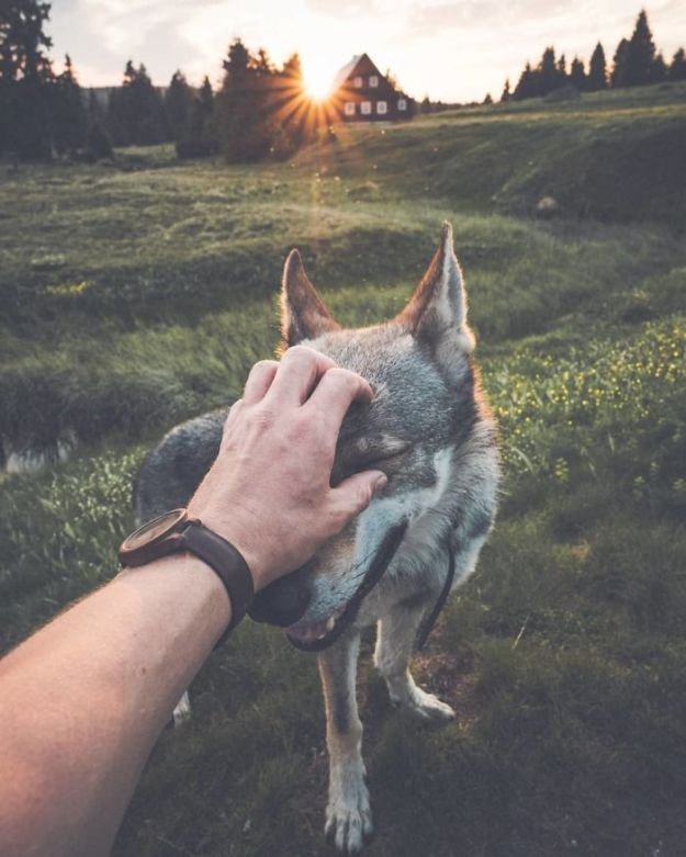 BjUDJ-PnJcB-png__700 Tired Of #FollowMeTo Instagram Pics? This Guy Pets His Dog Everywhere He Goes, And It's 1000 Times Better Design Photography Random