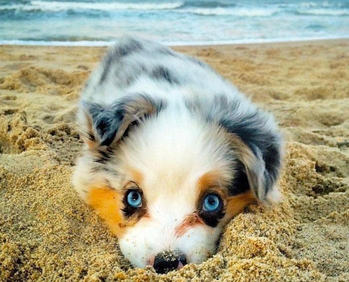 Cute Puppies Bored Panda