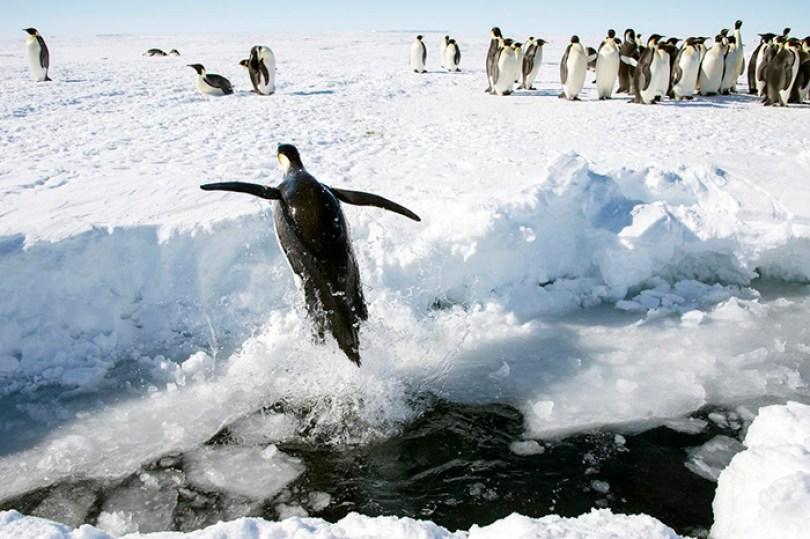 Antártida é o único continente sem répteis e cobras