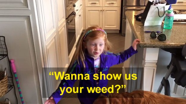 schoolgirl-tells-teacher-father-growing-weed-25-1 Daughter Tells Her Teachers That Dad Is Growing 'A Ton Of Weed' At Home, And It Escalates Hilariously Design Random