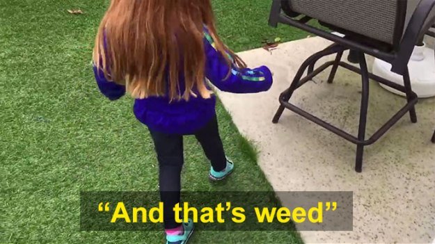 schoolgirl-tells-teacher-father-growing-weed-29 Daughter Tells Her Teachers That Dad Is Growing 'A Ton Of Weed' At Home, And It Escalates Hilariously Design Random