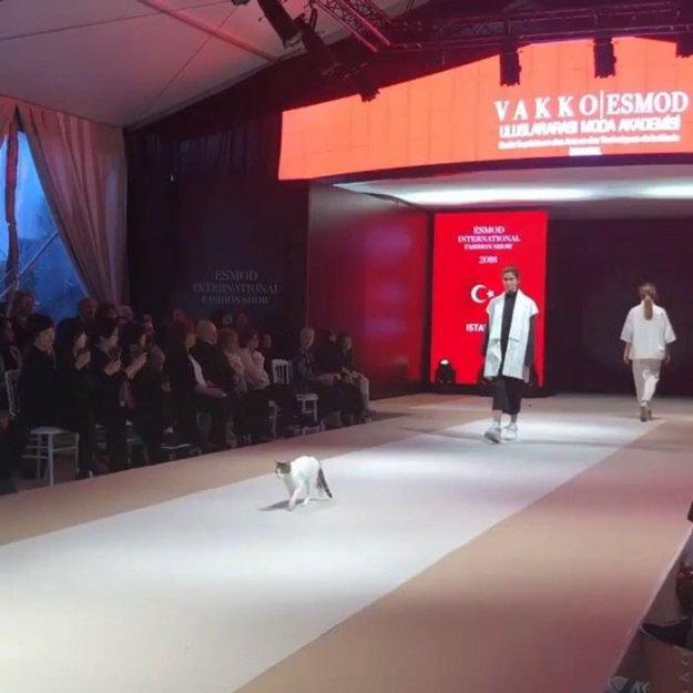 stray-cat-istanbul-fashion-show-vakko-esmod-5bd6bf9a6d0e4__700 Random Cat Crashes Fashion Show, Fights Models Design Random