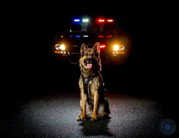 vancouver-police-department-charity-dog-calendar-2019-11-5bd16e0d3deaf__700 Vancouver Police Canine Unit Just Released Their 2019 Charity Calendar And It's Badass Design Random