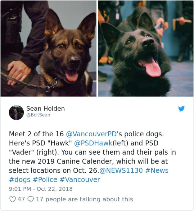 vancouver-police-department-charity-dog-calendar-2019-20-5bd16fa22e6ee__700 Vancouver Police Canine Unit Just Released Their 2019 Charity Calendar And It's Badass Design Random