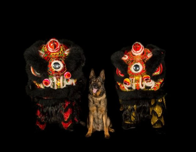 vancouver-police-department-charity-dog-calendar-2019-8-5bd16e035c9e6__700 Vancouver Police Canine Unit Just Released Their 2019 Charity Calendar And It's Badass Design Random