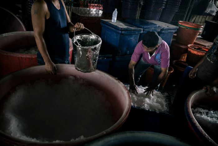 A Burmese Migrant Working Illegally At A Thai-Owned Shrimp Processing Plant In Samut Sakhon, Thailand