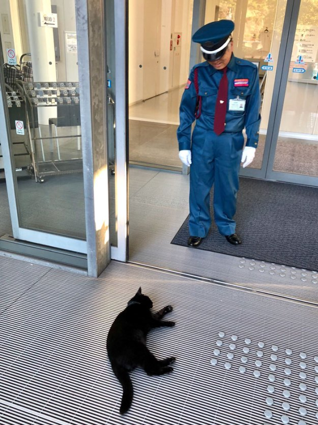 12-5bee7506aa394__700 Two Cats In Japan Have Been Trying To Sneak Into A Museum For Years (30 Pics) Design Random