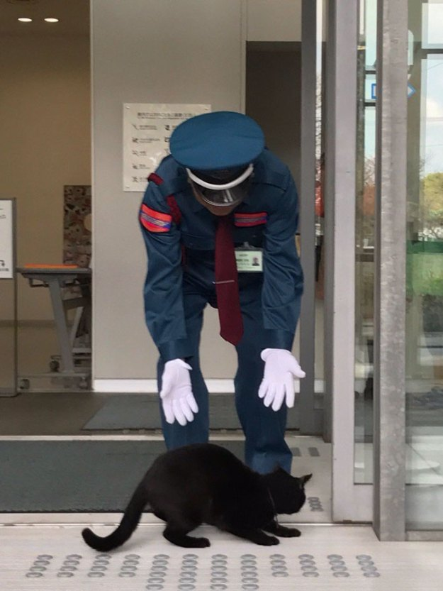 3-5bee74f3f023c__700 Two Cats In Japan Have Been Trying To Sneak Into A Museum For Years (30 Pics) Design Random
