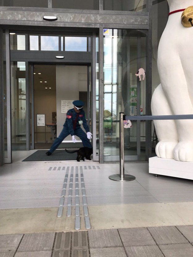 4-5bee74f766c49__700 Two Cats In Japan Have Been Trying To Sneak Into A Museum For Years (30 Pics) Design Random