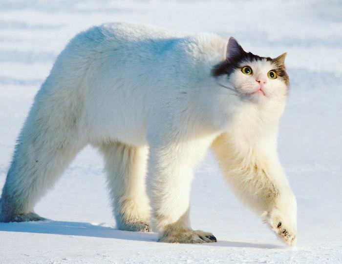 Gatos-Photoshop-Funny-Cakes-Pinceles de las partes de las partes de las partes de las partes de la naturaleza (19659004) Cats-Photoshop-Funny-Cakes1todough1