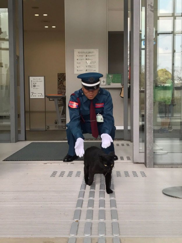 5-5bee74f92730a__700 Two Cats In Japan Have Been Trying To Sneak Into A Museum For Years (30 Pics) Design Random