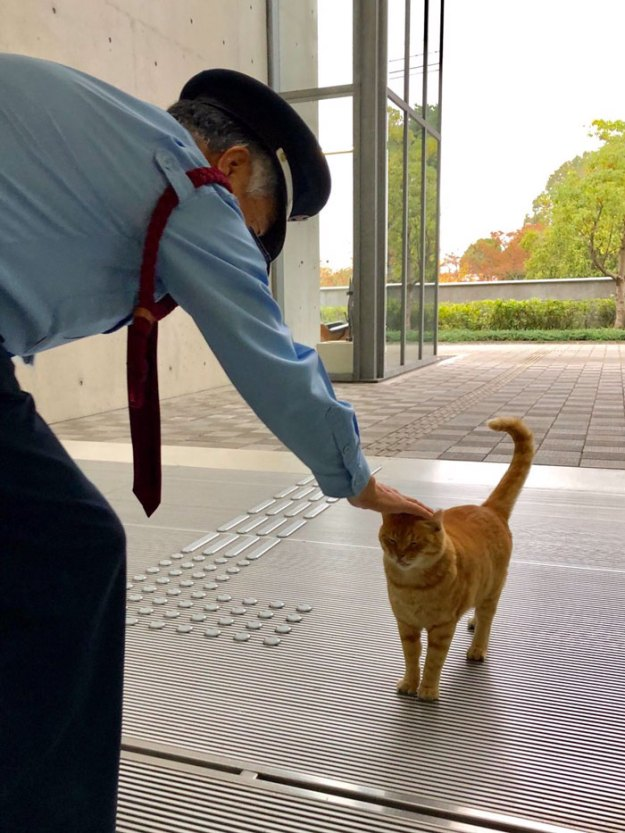 7-5bee74fce4cb4__700 Two Cats In Japan Have Been Trying To Sneak Into A Museum For Years (30 Pics) Design Random