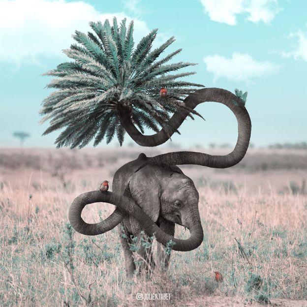 Elephant-5bdb8ec66ddad__700 Here's How I Imagine Animals Behave When You Aren't Looking (10+ Pics) Design Random